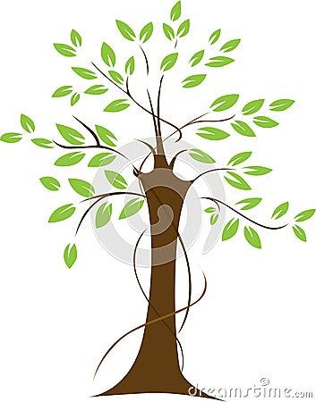 Leafy green tree