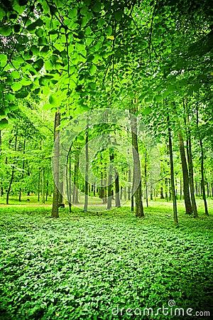 Leafy green wood