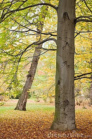 Leafy park in autumn