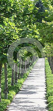 Leafy Sidewalk