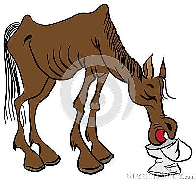 A lean horse
