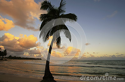 Leaning palm tree at Las Terrenas beach at sunset, Samana penins