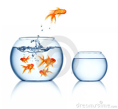 Free Leaping Goldfish Royalty Free Stock Image - 16532306