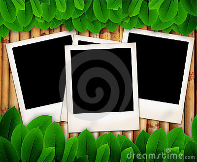 Leave of plant and photo frame on bamboo