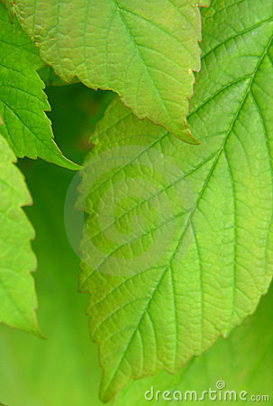 Free Leaves Stock Images - 118414