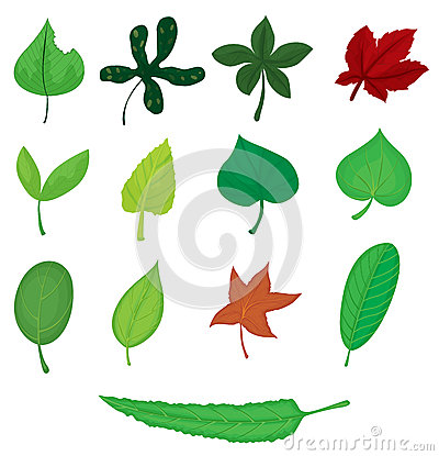 Free Leaves Royalty Free Stock Photos - 33692528