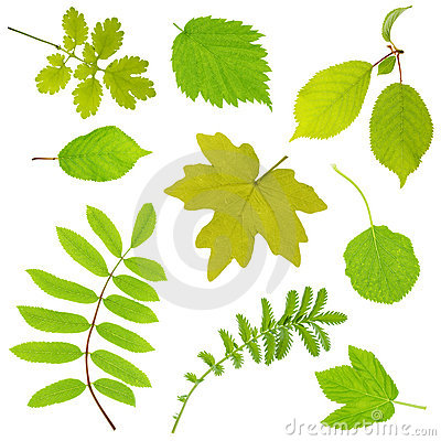 Free Leaves Royalty Free Stock Images - 5374929