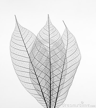 Free Leaves Stock Images - 7314474