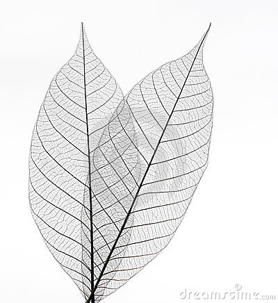 Free Leaves Stock Photo - 7314570