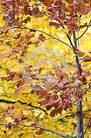 Leaves from autumn season