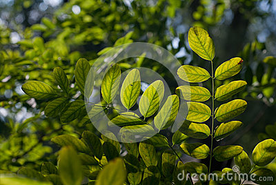 Leaves in backlight