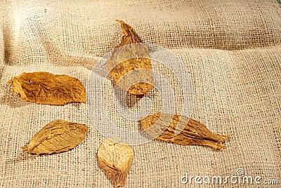Leaves on a bag