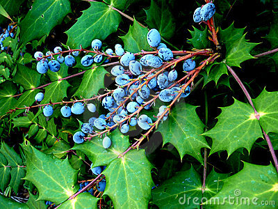 Leaves And Berries 3