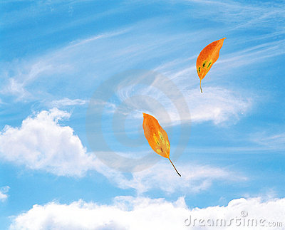 Leaves Blowing In The Wind Stock Photography - Image: 17881732