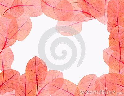 leaves border on white background