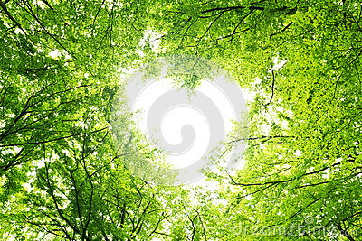 Leaves canopy heart