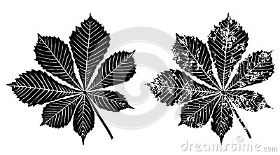 Leaves of chestnut tree