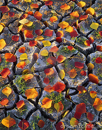 Free Leaves & Cracked Dirt Royalty Free Stock Photo - 807165