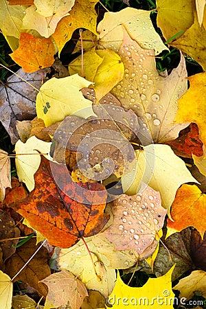 Free Leaves Fallen Winter Nature Ground Autumn Season Change Dew Drop Stock Photos - 40334643