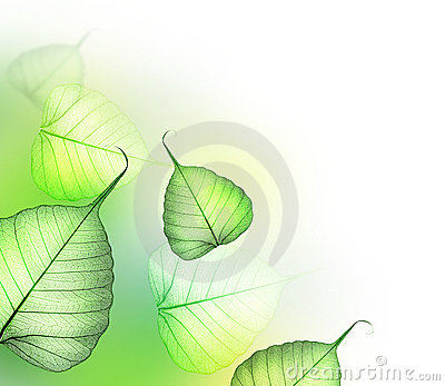 Leaves.Floral design