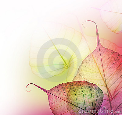 Free Leaves.Floral Design Stock Photo - 13172090