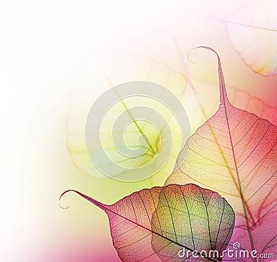 Leaves.Floral design