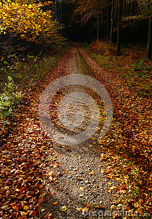 Leaves on a forest path