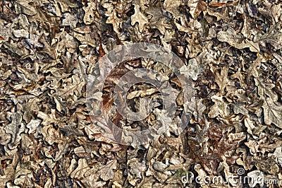 Leaves in HDR