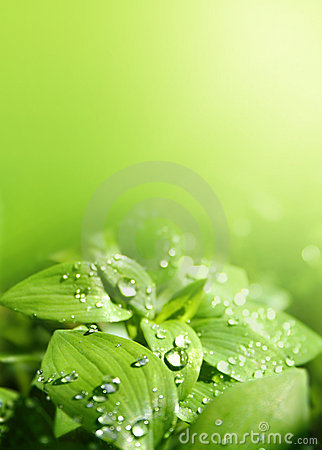 Free Leaves In A Sunshower Royalty Free Stock Photos - 8186198