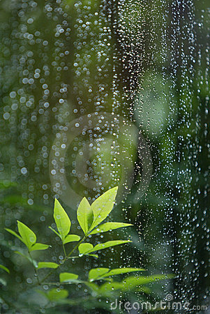 Free Leaves In Rain Royalty Free Stock Photo - 9537645