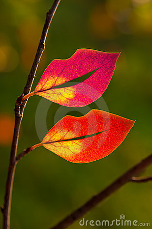 Free Leaves In The Shape Of Lips Royalty Free Stock Images - 20627549