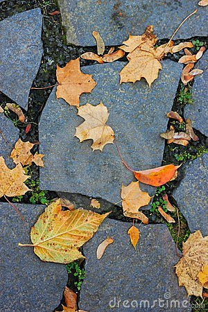 Leaves lie on a paved road