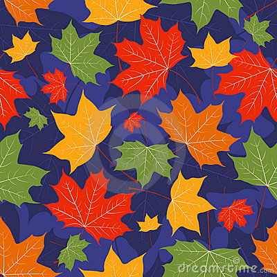 Leaves of a maple on dark blue.