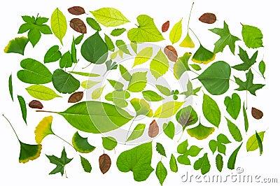 Leaves material