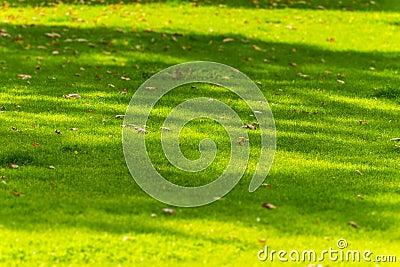 Leaves on meadow