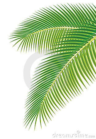 Free Leaves Of Palm Tree On White Background. Royalty Free Stock Photo - 18363305
