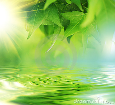 Free Leaves Over Water Stock Image - 5222361