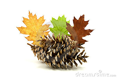 Leaves And Pine Cones Royalty Free Stock Photo - Image: 16408995