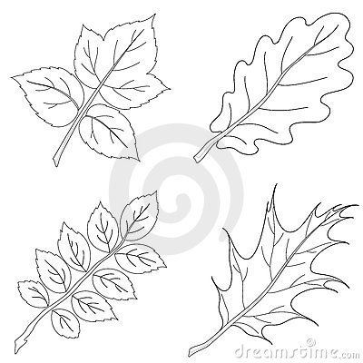 Leaves of plants, contour, set