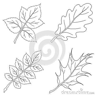 Leaves of plants, contour, set