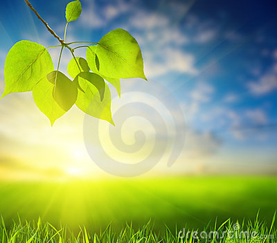 Leaves of poplar (shallow DOF)