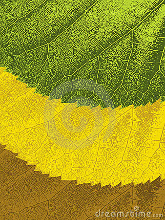 Leaves with ragged edges and seasonal colors
