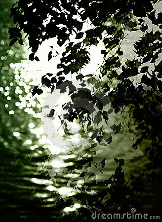 Leaves reflecting on water