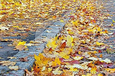 Leaves on the street