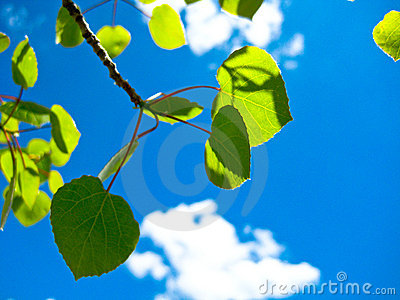 Leaves in the summer