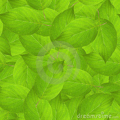 Leaves texture