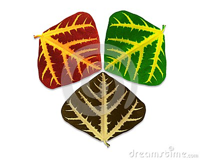 Leaves of three seasons.