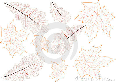 Leaves veins background illustration
