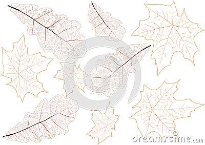 Leaves veins background illustration