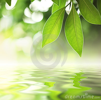 Free Leaves Water Royalty Free Stock Photos - 18792018